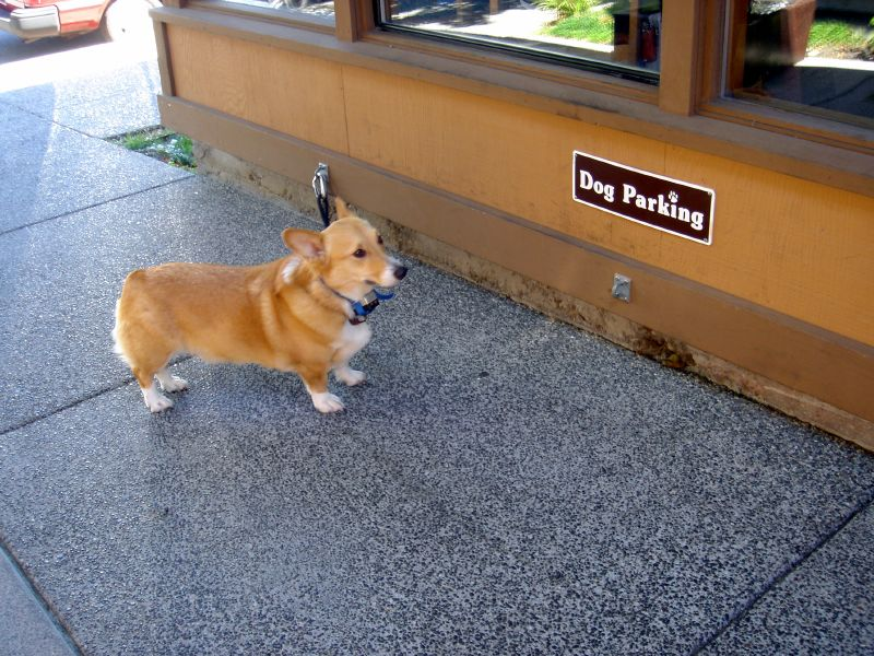 Dog Parking at Sushi Ran