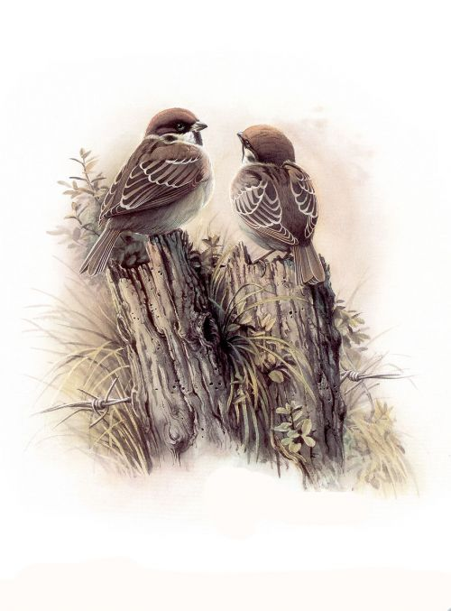1474340957 bd7f4286e6 o - cute bird paintings