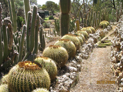 Outdoor cactus garden in riverland 4607836332_23edf386dd