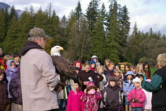 "Fraser Valley Bald Eagle Presentation • <a style=""font-size:0.8em;"" href=""http://www.flickr.com/photos/51193137@N08/4721580681/"" target=""_blank"">View on Flickr</a>"