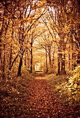 follow the path (the*Glint - new portfolio online http://www.thegli) Tags: wood autumn trees orange nature automne way dof natural path atmosphere shades special arbres contraste foret chemin mystique glint pdc tons ambiance theglint