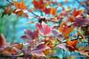 Leaves (Rafakoy) Tags: city autumn ny newyork color colour fall colors leaves digital season leaf colours image centralpark manhattan images sample circularpolarizer afsnikkor18105mmvr nikond7000