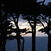 Silhouetted Trees and Ocean
