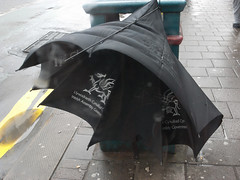 broken WAG in the bin (the incredible how (intermitten.t)) Tags: me broken umbrella blackwhite do think bin badgers rubbish what wag wants makes 16973 welshassemblygovernment unmrella 11112010