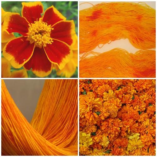 My Marigold Yarn