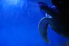 sea turtle - by gredaline