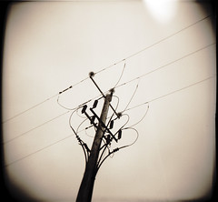 Grid-II.ie (Buck Lewis) Tags: ireland blackandwhite bw 120 film electric grid holga lomo power killarney powerline thephotoholic
