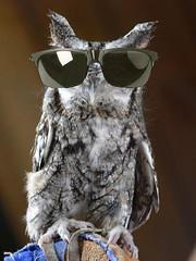 GSO sunglasses