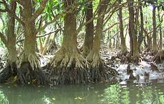 Changing Tide (tanukikun) Tags: japan honeymoon mangrove amamioshima