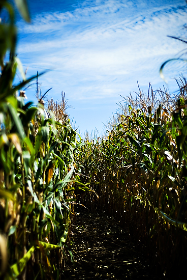 Get Lost…. in the corn maze!!!