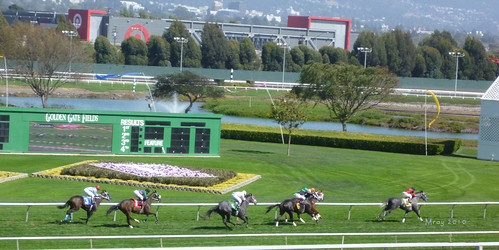 golden gate fields 081