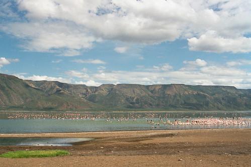 LB Lake Bogoria Flamingos