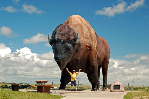 World's Largest Buffalo