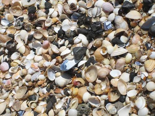 Swansea seashore