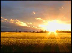 sunset 19.07.2007 (pebblebeech) Tags: sunset sun sol field finland sony h1 maisema sonyh1 auringonlasku aurinko pelto viljapelto