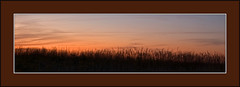 Prairie Sunset (baldwinm16) Tags: sunset nature illinois forrest grasses wildflowers prairie preserve springbrook springbrookprairie