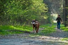 Go Sniff Seminar, April 2010 (Cave Cani) Tags: hunde krpersprache hundeschule seminare freilauf suchspiel hundetraining hundeerziehung nasenspiel nasenwelt gosniff nasenarbeit suchspiele hundetrainingteamarbeit