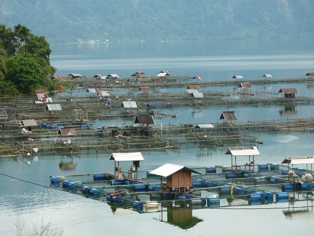 Sumatra-Lac Maninjau (131)