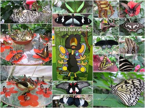 serre aux papillons