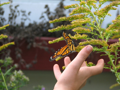 Setting the butterfly free