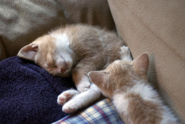 cute foster kittens sleeping