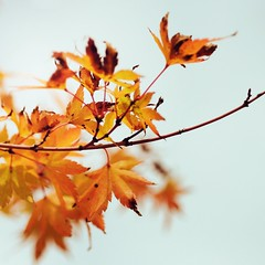 Phantom Limbs (~Minnea~) Tags: trees fall leaves dof bokeh squareformat 60mm28 natureycrap nikond90