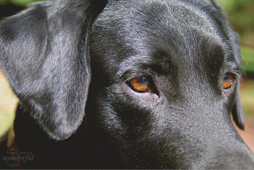 Hunt_Dog