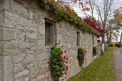 Queenston Charm (A Great Capture) Tags: world old flowers autumn ontario canada fall stone wall vine charm on queenston ald ash2276 ashleyduffus ald ashleysphotographycom ashleysphotoscom ashleylduffus wwwashleysphotoscom