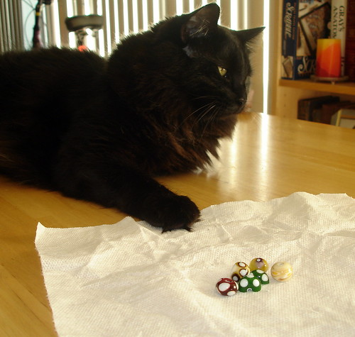 Cat and Beads