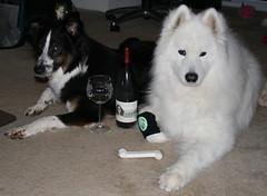Vayniac Doggies