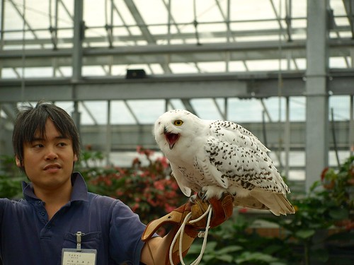 神戸花鳥園 (55)