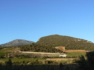vignes à Patrimonio.jpg