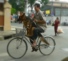 This Guy Loves His Dog - Vietnam