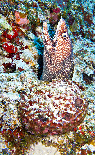 Diving Cozumel 12