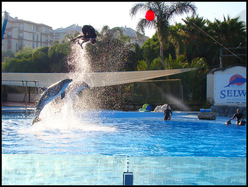 Espectáculo Delfines (5)