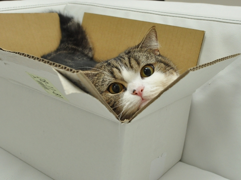 cute maru in a box