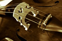 Got Bass? (Kenneth B) Tags: wood music white black art canon rebel 50mm dof florida bass handmade sound naples string 18 mercato xsi intrument