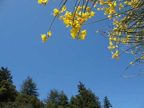 Sky, flowers, trees