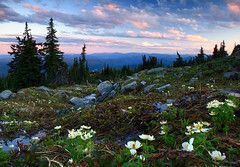 Big White alpine (storm light) Tags: flowers sunset wet bc hiking okanagan meadows boulders seepage globeflowers bigwhitemountain snowbed