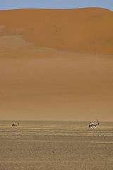Oryx in the distance / Oryx en la distancia (elosoenpersona) Tags: africa nikon desert d70 wildlife sigma desierto distance namibia oryx namib naukluft sigma70300f456 specnature abigfave aplusphoto superbmasterpiece elosoenpersona