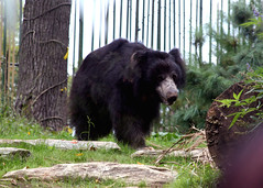 DC Zoo 010 (iamjosh) Tags: dczoo
