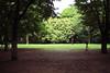 広場の芝生