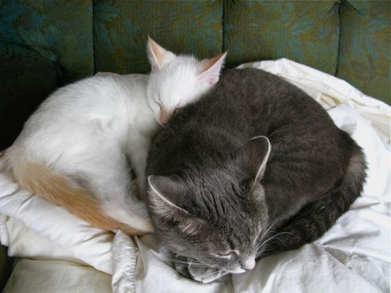cat love 006