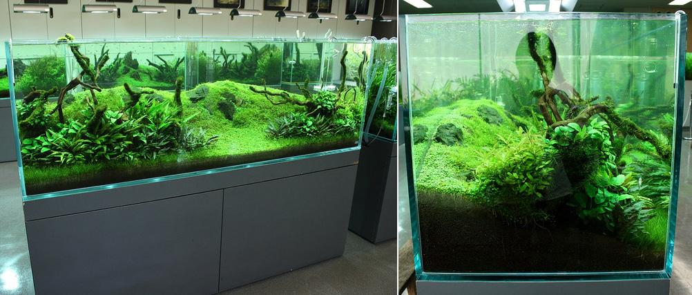 Landscape Aquarium : Thread: Albert Namatjira inspired Australian aquarium landscape