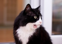 ZOMG (Carl_Reid) Tags: blackandwhite cat ugly southport