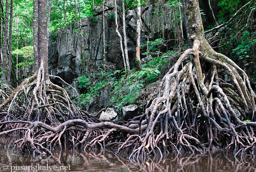 mangrove_forest2