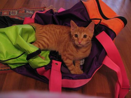 Gigi nella borsa di Cinzia