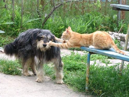 781302611 0b51a4c69e Funniest Animals