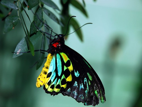 Green and Yellow Butterfly