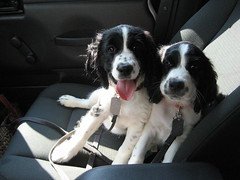 Oscar & Ruby, in the passenger's seat of jeep.